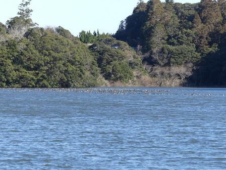 水辺の鳥の観察_a0123836_16434396.jpg