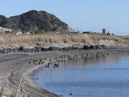 水辺の鳥の観察_a0123836_16434410.jpg