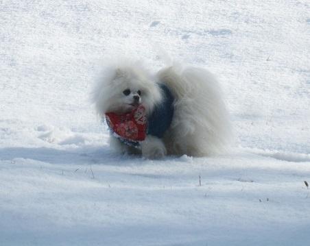 京都のお山で雪あそび(1)_b0177436_22465851.jpg