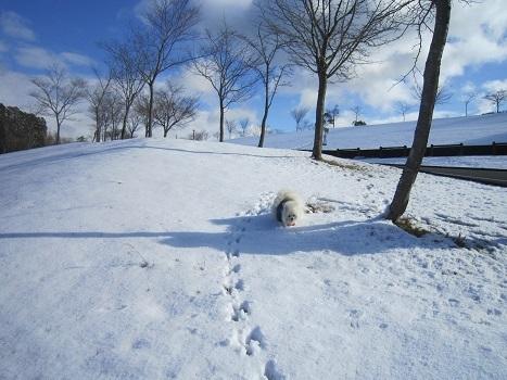 京都のお山で雪あそび(1)_b0177436_22521296.jpg