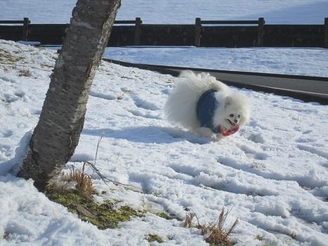 京都のお山で雪あそび(1)_b0177436_22542968.jpg