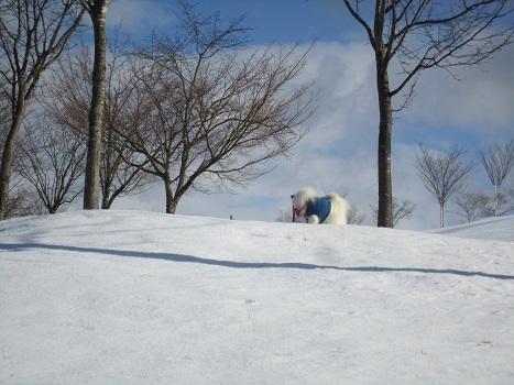 京都のお山で雪あそび(1)_b0177436_22582982.jpg