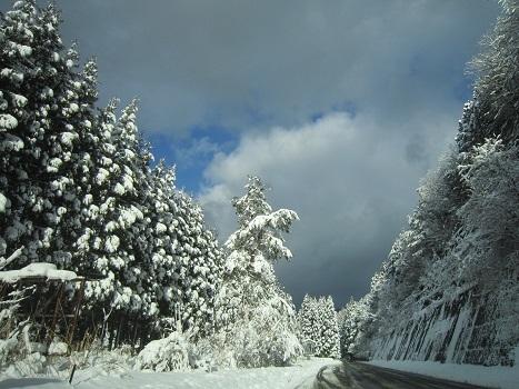 京都のお山で雪あそび(1)_b0177436_23043375.jpg
