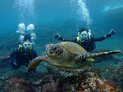 冬だけど、体験ダイビング人気です(^^)v_b0189640_17543163.jpg