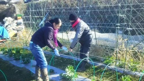 今朝は寒い中ボランティアの方々3名様と千貫&飯田ジョイア2名の5名作業でした。_c0222448_12084656.jpg