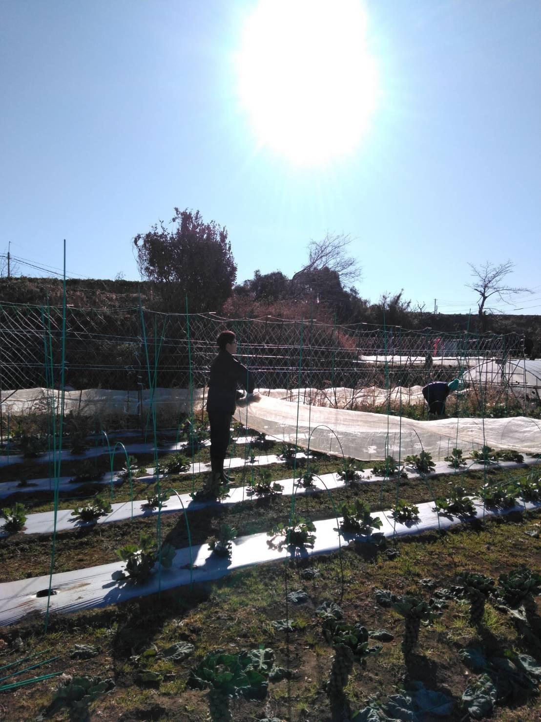 今朝は寒い中ボランティアの方々3名様と千貫&飯田ジョイア2名の5名作業でした。_c0222448_12111009.jpg