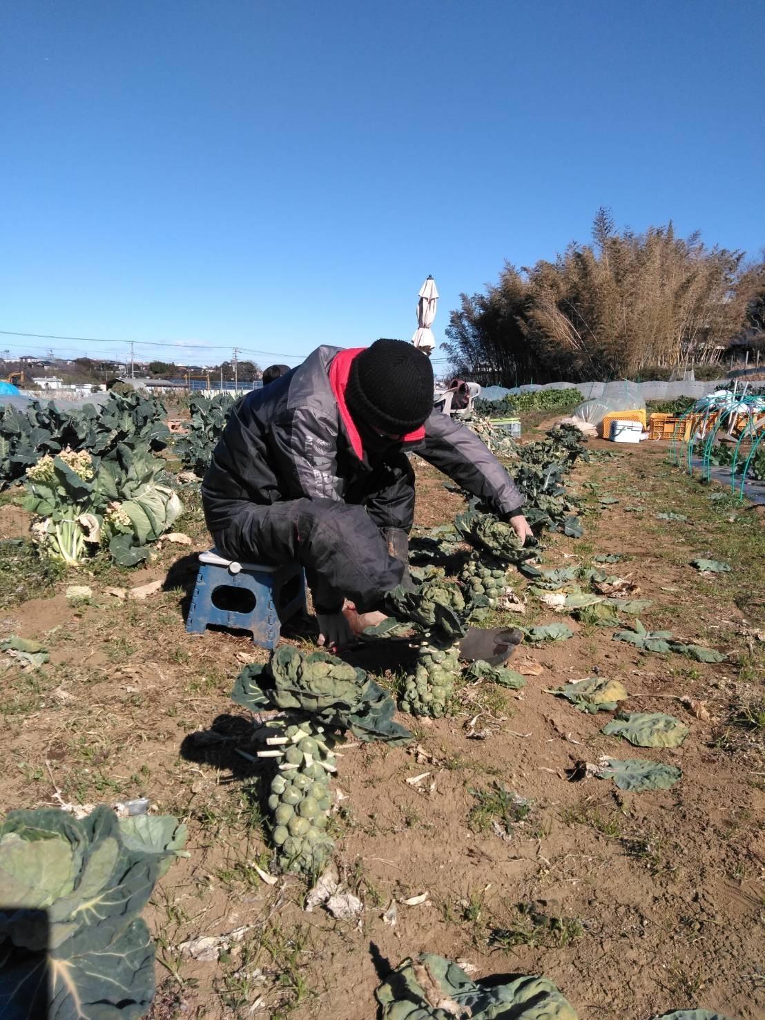 今朝は寒い中ボランティアの方々3名様と千貫&飯田ジョイア2名の5名作業でした。_c0222448_12112969.jpg