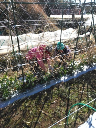 今朝は寒い中ボランティアの方々3名様と千貫&飯田ジョイア2名の5名作業でした。_c0222448_12114087.jpg