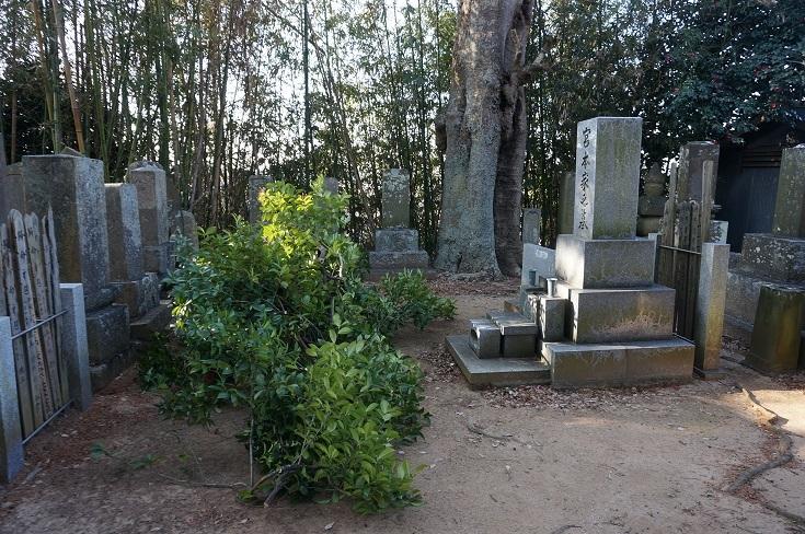 墓のヒノキのこと_b0124462_11534593.jpg