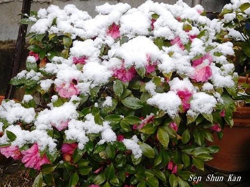 京都は雪  2020年2月9日_a0164068_11240581.jpg