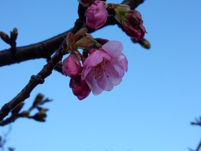 今日の河口の桜_e0175370_21224860.jpg