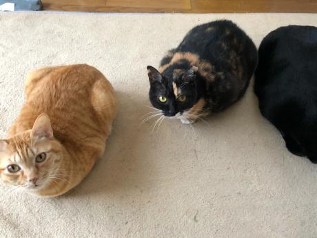 猫がいっぱいいると_e0355177_15114186.jpg