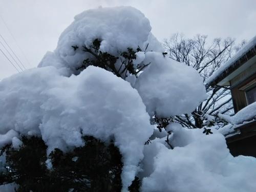 本格的な冬の積雪になりました_b0126182_10142968.jpg