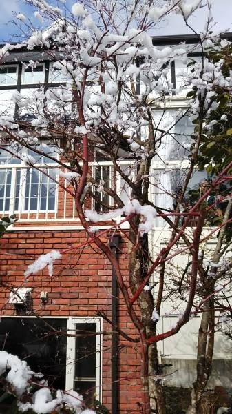 この冬はじめての雪景色_e0262382_20584659.jpg