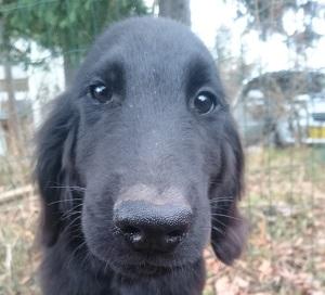 犬は大らかに育てよう!④_b0084194_21005656.jpg
