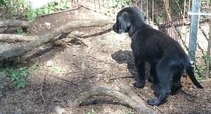 犬は大らかに育てよう!④_b0084194_21011181.jpg
