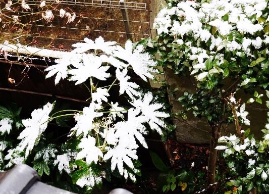 再び~雪の花_e0167795_14254272.jpg