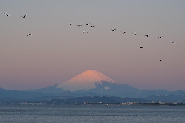 湘南海岸の満月と富士山_b0145398_16511363.jpg