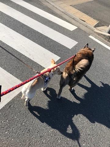 のんちゃんの散歩友達♪_f0242002_18405002.jpg