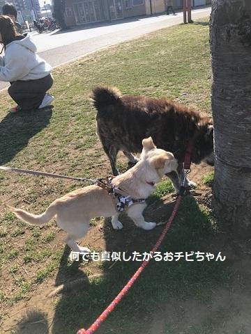のんちゃんの散歩友達♪_f0242002_18410246.jpg