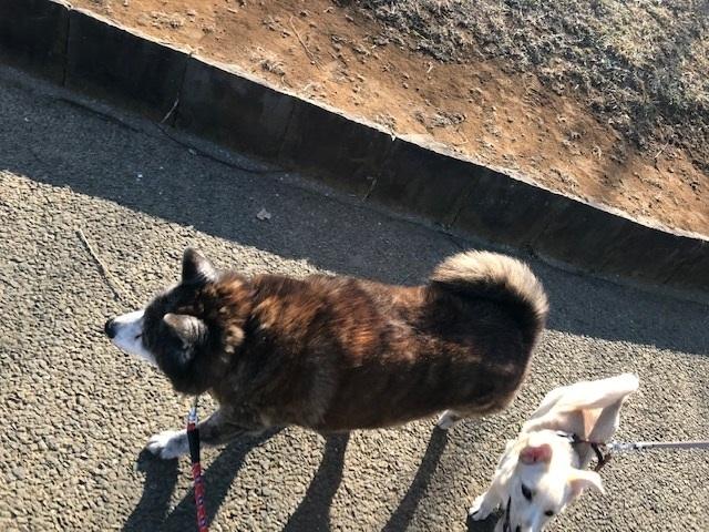 のんちゃんの散歩友達♪_f0242002_18411825.jpg