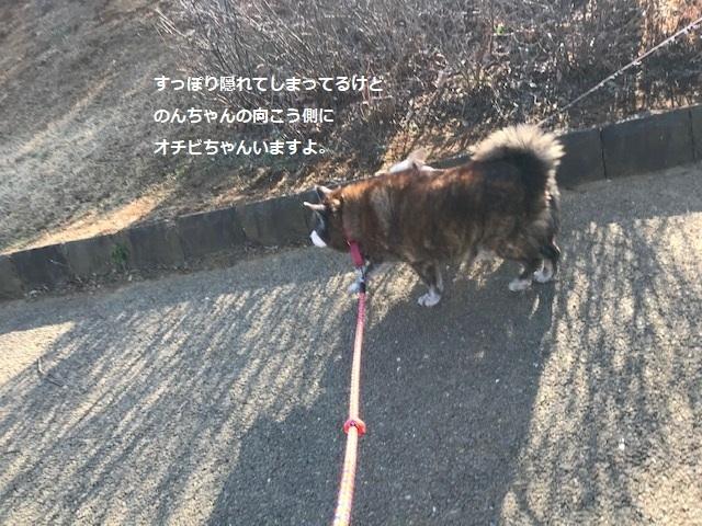 のんちゃんの散歩友達♪_f0242002_18412426.jpg
