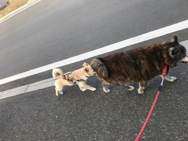 のんちゃんの散歩友達♪_f0242002_18415900.jpg
