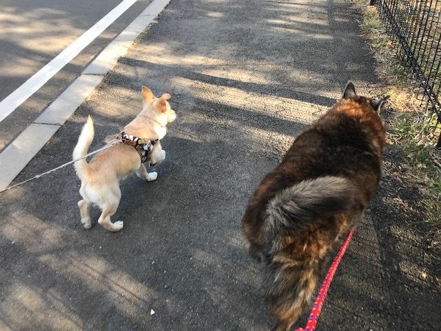 のんちゃんの散歩友達♪_f0242002_18421054.jpg