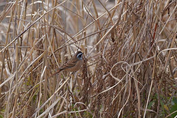 鳥は歩いて観るのだ_a0278809_16543231.jpg