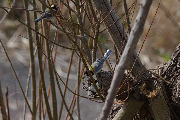 鳥は歩いて観るのだ_a0278809_16545514.jpg
