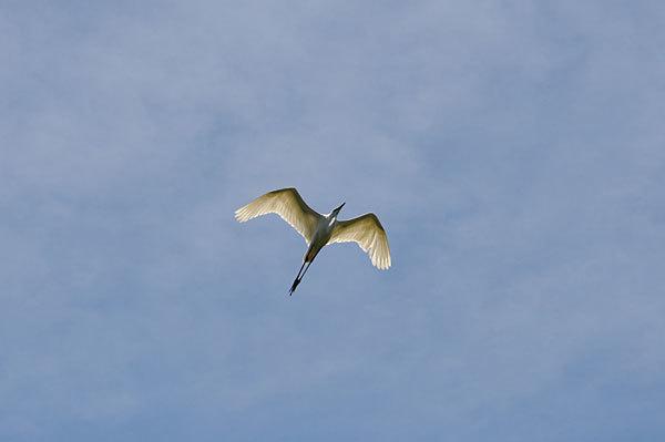 鳥は歩いて観るのだ_a0278809_17042605.jpg