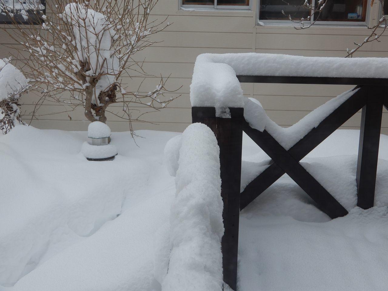 この冬の底は抜けたようですが_c0025115_22164654.jpg