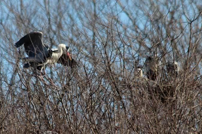 多摩動物公園の鳥たち~春の兆しに飛ぶニホンイヌワシ(March 2019)_b0355317_22171262.jpg