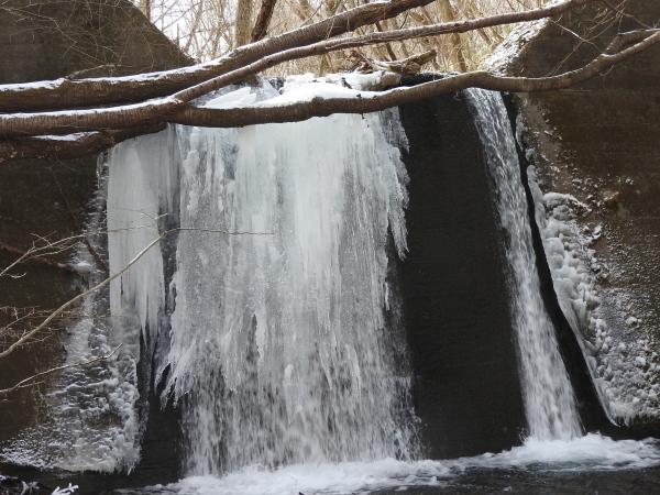 真冬から春の気温へ(2020年2月10日)_b0174425_15570220.jpg