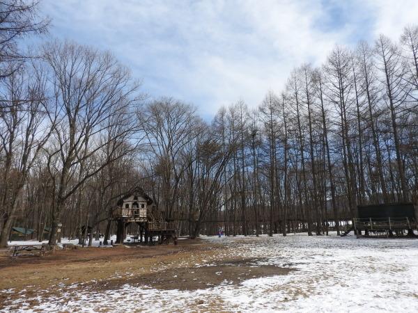 真冬から春の気温へ(2020年2月10日)_b0174425_15573771.jpg