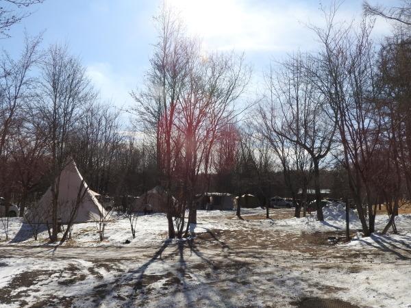 真冬から春の気温へ(2020年2月10日)_b0174425_15575090.jpg