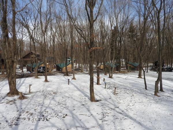 真冬から春の気温へ(2020年2月10日)_b0174425_15580027.jpg