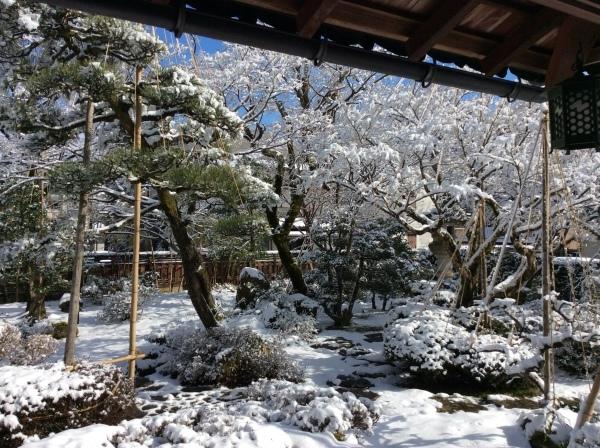 今季2度目の積雪_f0289632_07260851.jpg