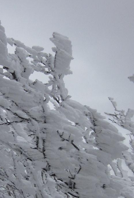 霧氷を求めて高見山へ_c0038434_21293458.jpg