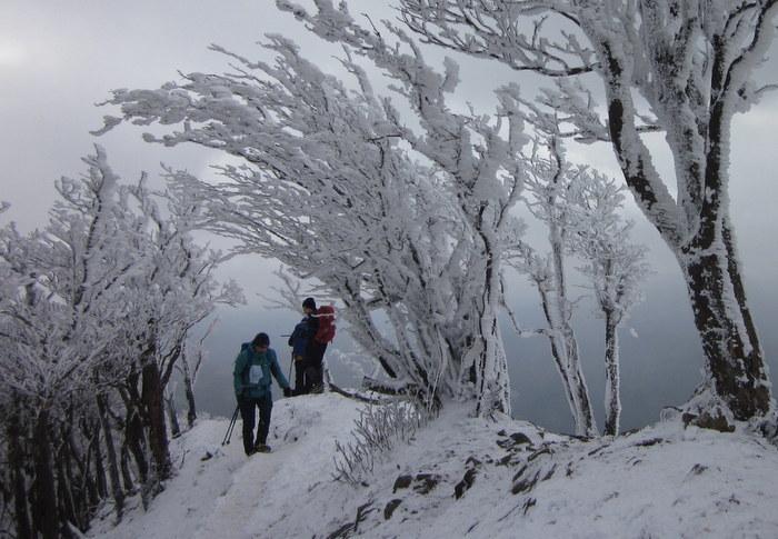 霧氷を求めて高見山へ_c0038434_21293938.jpg