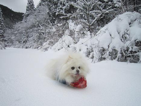 京都のお山で雪あそび(2)_b0177436_20323845.jpg