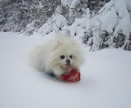 京都のお山で雪あそび(2)_b0177436_20335879.jpg