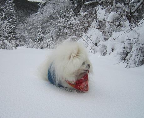 京都のお山で雪あそび(2)_b0177436_20342034.jpg