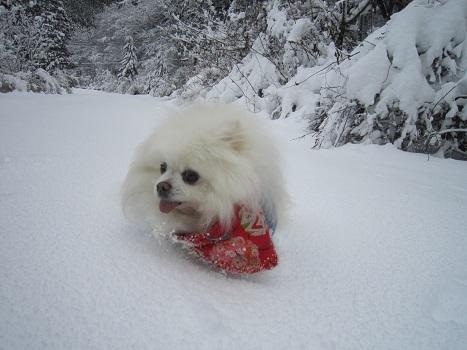 京都のお山で雪あそび(2)_b0177436_20345845.jpg