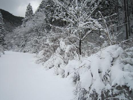 京都のお山で雪あそび(2)_b0177436_20371336.jpg