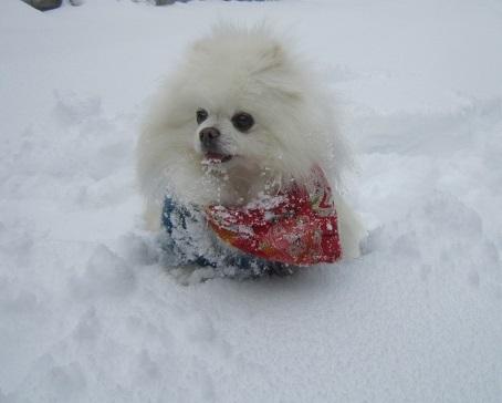 京都のお山で雪あそび(2)_b0177436_20385691.jpg