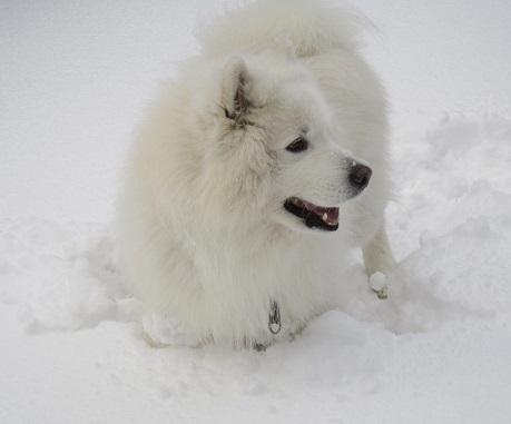 京都のお山で雪あそび(2)_b0177436_21023627.jpg