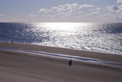 光る海・冬の渥美半島_c0019338_10453817.jpg