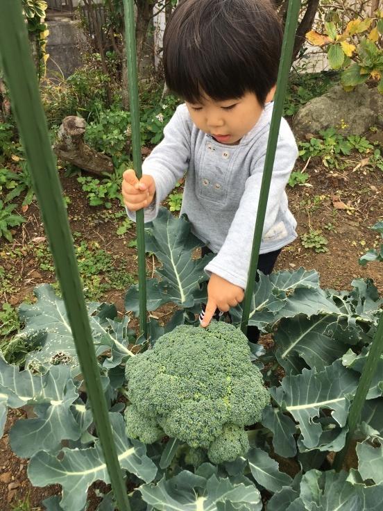 TUTi畑とブロッコリー踊り_d0386342_10000439.jpg