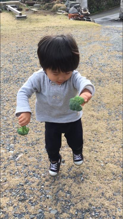 TUTi畑とブロッコリー踊り_d0386342_10083260.jpg